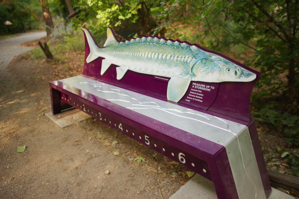 Morrison Knudson Nature Center Boise, Idaho Custom Sturgeon Bench